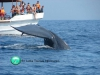 whale-watching-trincomalee-4