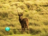 Horton-plains-national-park-deer